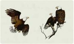 Bacova Mailbox Eagle 10001