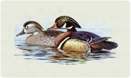 Bacova Mailbox Wood Duck 10162