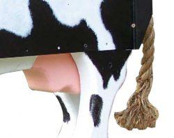 Pinehill Woodcraft Cow Close Up